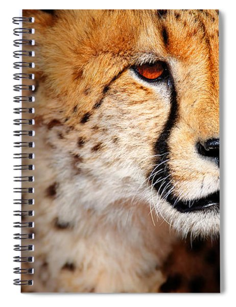 Cheetah Portrait Spiral Notebook