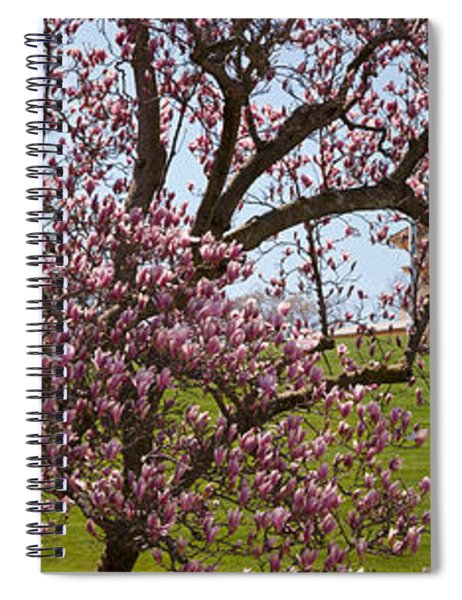 Cherry Blossom Trees At The Gravesite Spiral Notebook