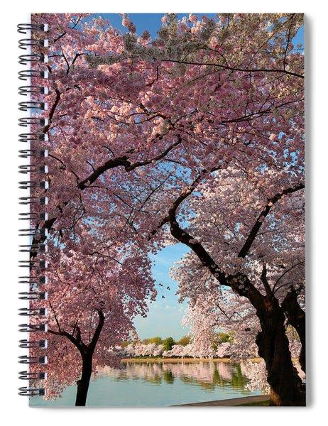 Cherry Blossoms 2013 - 024 Spiral Notebook