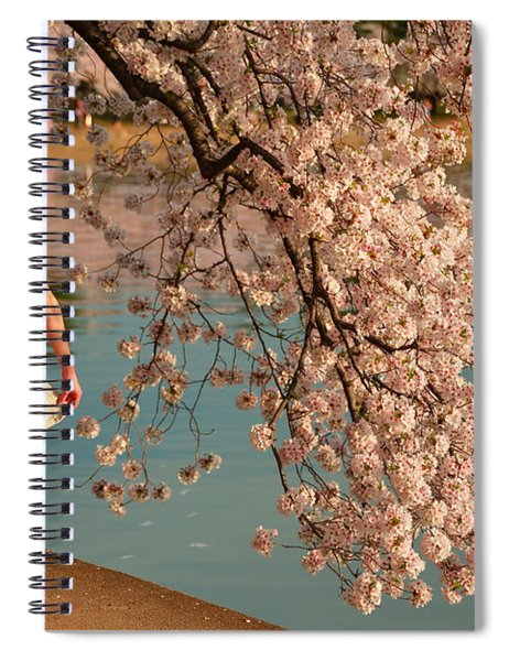 Cherry Blossoms 2013 - 082 Spiral Notebook