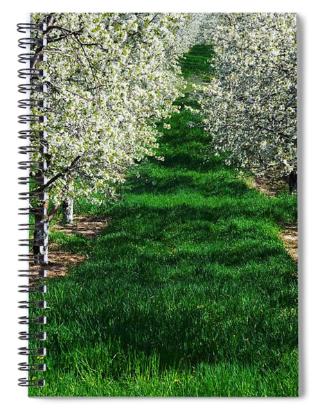 Cherry Orchard Morning Spiral Notebook