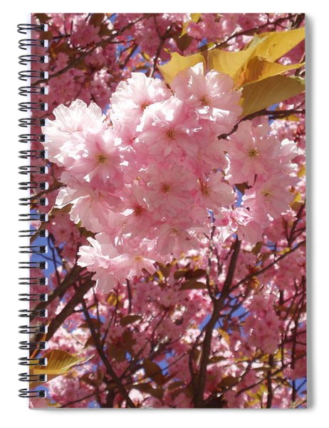 Cherry Trees Blossom Spiral Notebook
