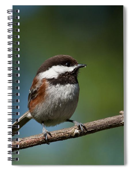 Chestnut Backed Chickadee Perched On A Branch Spiral Notebook