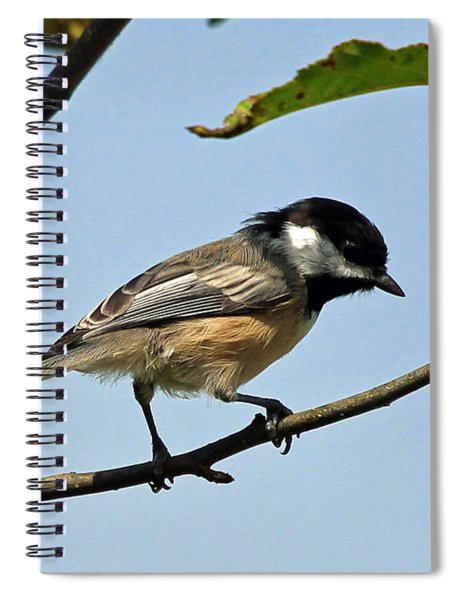 Chickadee Spiral Notebook