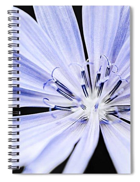 Chicory Flower Macro Spiral Notebook