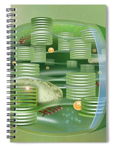 Chloroplast - Basis Of Life - Plant Cell Biology - Chloroplasts Anatomy - Chloroplasts Structure Spiral Notebook