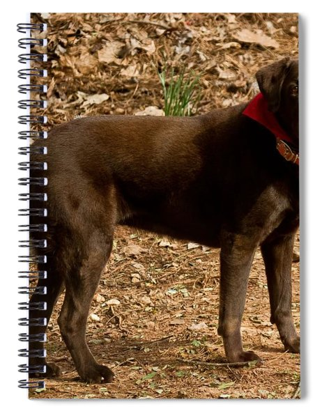 Spiral Notebook featuring the photograph Chocolate Lab by Robert L Jackson