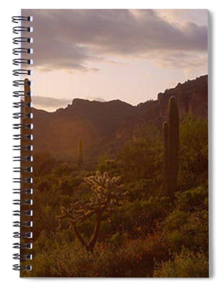 Cholla Cactus In A Field, Phoenix Spiral Notebook