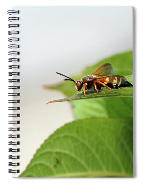 Cicada Killer Spiral Notebook