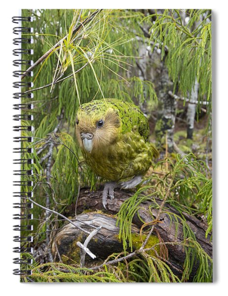 Ckakapo Male In Forest Codfish Island Spiral Notebook