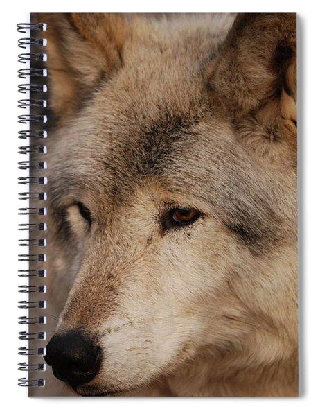 Close Up Spiral Notebook