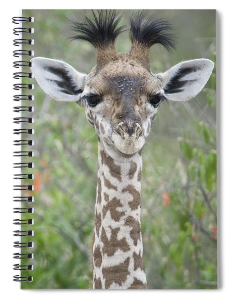 Close-up Of A Baby Giraffe Giraffa Spiral Notebook