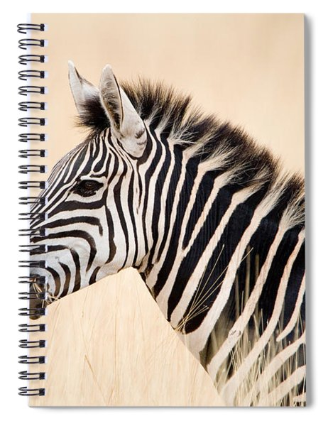 Close-up Of A Burchells Zebra Equus Spiral Notebook