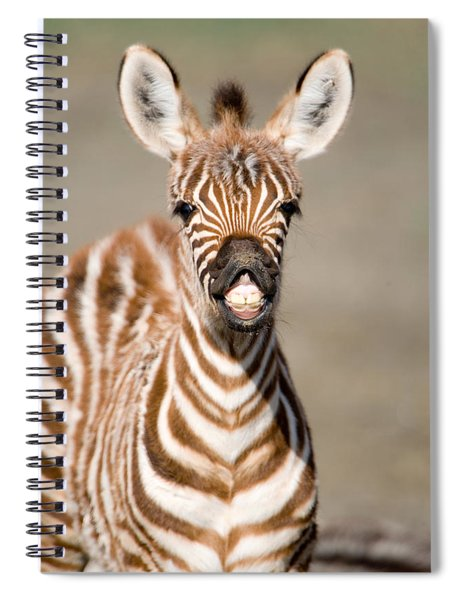 Close-up Of A Burchells Zebra Foal Spiral Notebook