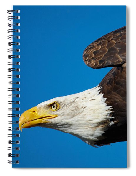 Close-up Of An American Bald Eagle In Flight Spiral Notebook