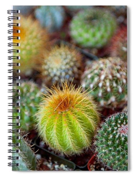 Close-up Of Multi-colored Cacti Spiral Notebook