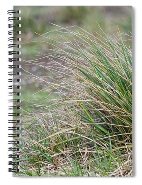 Close-up Of Striated Caracara Spiral Notebook
