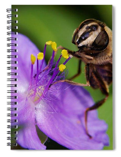 Closeup Of A Bee On A Purple Flower Spiral Notebook