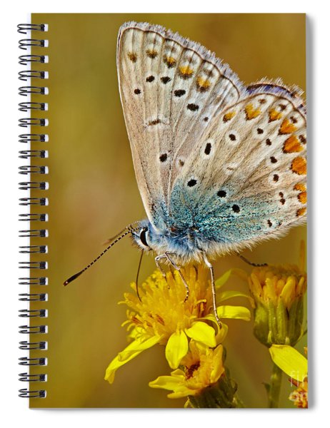 Closeup Of A Common Blue Butterfly Spiral Notebook