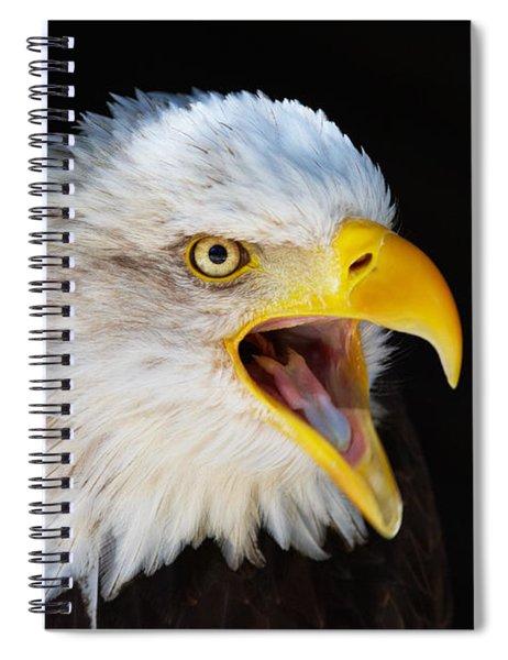 Closeup Portrait Of A Screaming American Bald Eagle Spiral Notebook