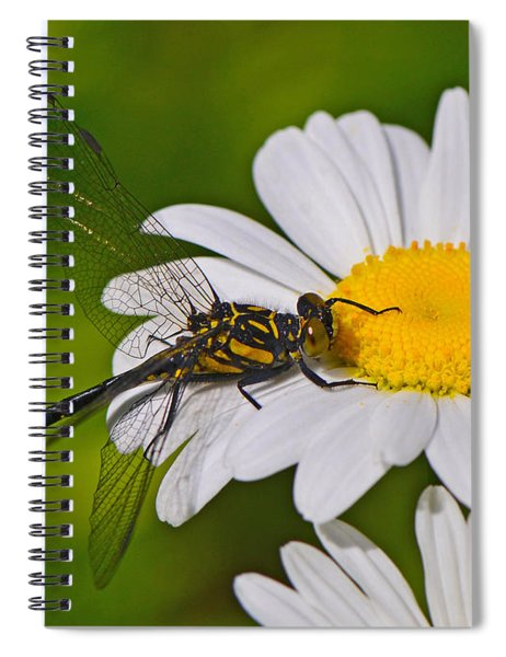 Clubtail Dragonfly On Oxeye Daisy Spiral Notebook