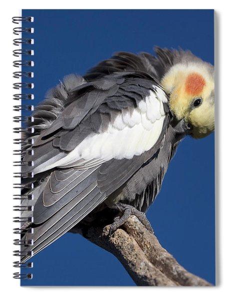 Cockatiel - Canberra - Australia Spiral Notebook