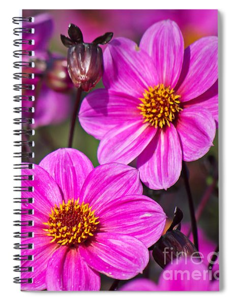 Colorful Dahlia Spiral Notebook