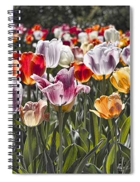 Colorful Tulips In The Sun Spiral Notebook