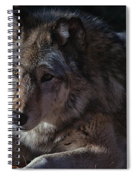 Colors Of A Wolf Spiral Notebook