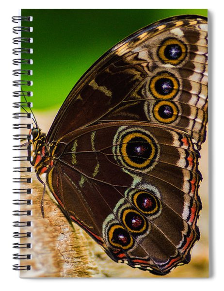 Spiral Notebook featuring the photograph Colour Display by Garvin Hunter