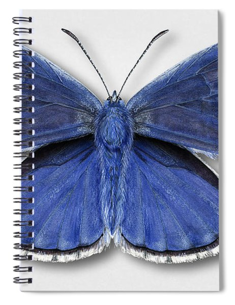Common Blue Butterfly - Polyommatus Icarus Butterfly Naturalistic Painting - Nettersheim Eifel Spiral Notebook
