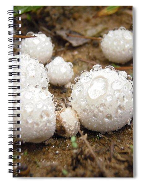 Common Puffball Dewdrop Harvest Spiral Notebook
