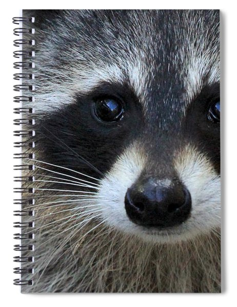 Common Raccoon Spiral Notebook