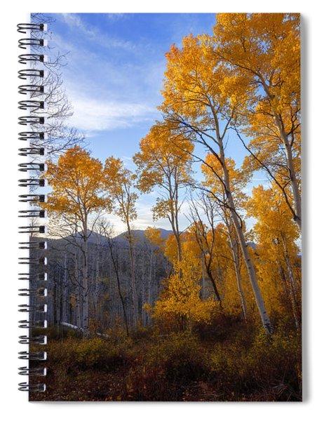 Comparison Spiral Notebook
