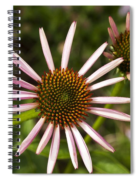 Cone Flower - 1 Spiral Notebook