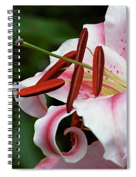 Consider The Lily Spiral Notebook