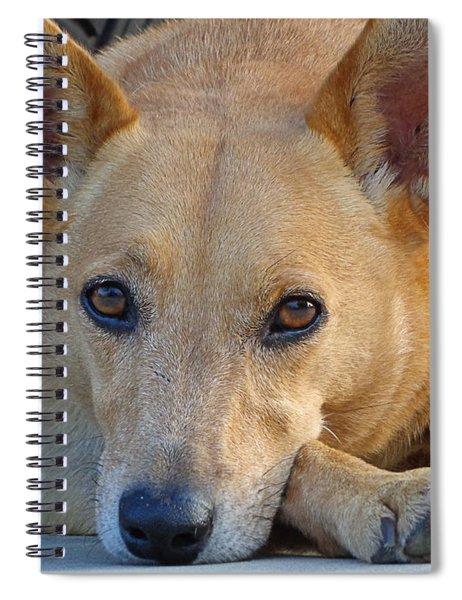 Cookie Chillin'  Spiral Notebook
