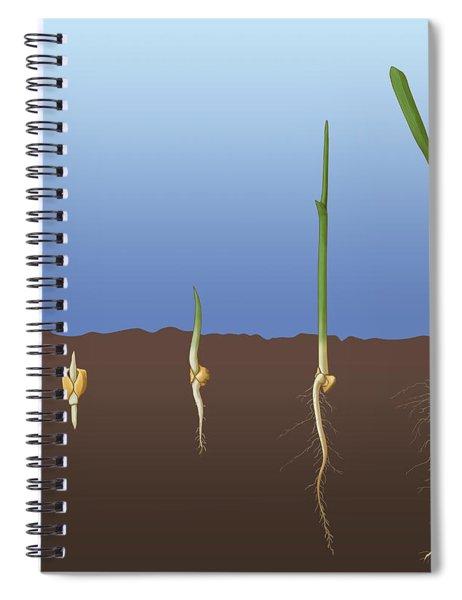 Corn Seed Germination, Illustration Spiral Notebook