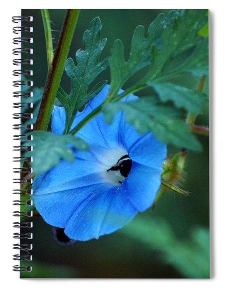 Country Blue Spiral Notebook