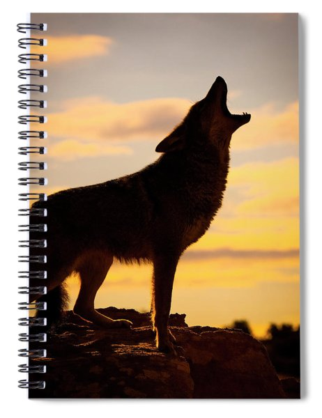 Coyote  Canis Latrans  Howling Spiral Notebook
