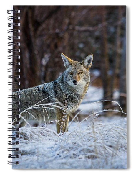 Coyote In The Meadow  Spiral Notebook