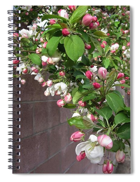 Crabapple Blossoms And Wall Spiral Notebook