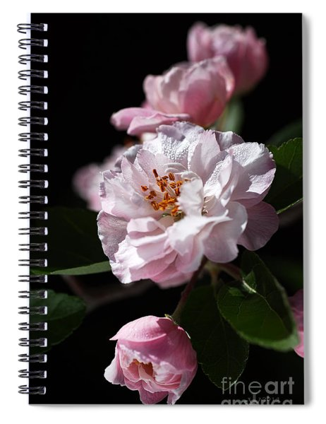 Crabapple Flowers Spiral Notebook