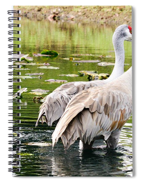 Crane Family Goes For A Swim Spiral Notebook