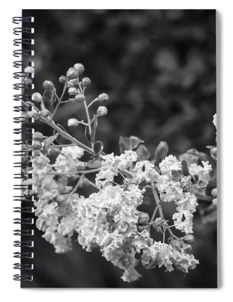 Crape Myrtles Tree Lagerstroemia Painted Bw Spiral Notebook