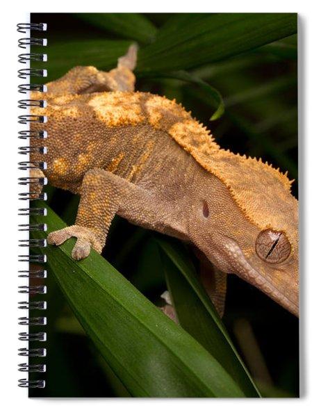 Crested Gecko Rhacodactylus Ciliatus Spiral Notebook