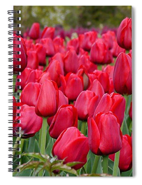 Crimson Tulips  Spiral Notebook