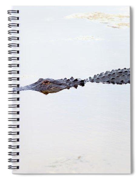 Crocodile In A Pond, Boynton Beach Spiral Notebook