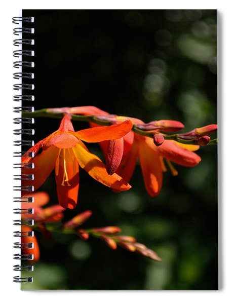Spiral Notebook featuring the photograph Crocosmia 'dusky Maiden' Flowers by Scott Lyons