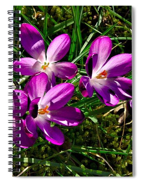 Crocus In The Grass Spiral Notebook